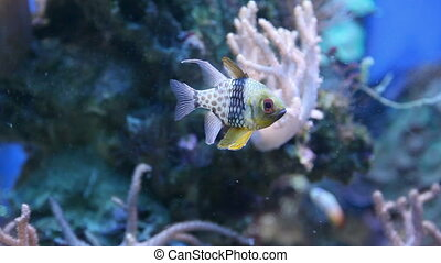 fish in the ocean against