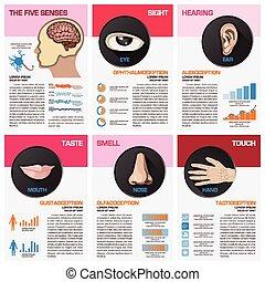 The Five Senses Chart Diagram Infographic Infographic Design...