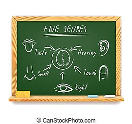 The Five Senses - Hand-drawn vector infographic on a wood...