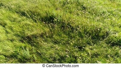 The flight on Steppe grass swaying in wind. Russia - The...