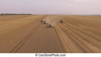 The Flight Over a Field of Wheat. Combine Harvester Gathers the Wheat crop