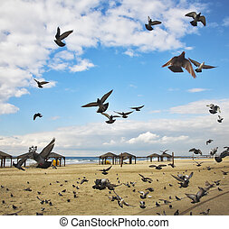 The flight pigeons was flied on sand of a beach to peck a ...