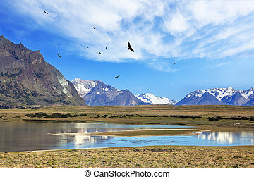 The flock of Andean condors flying on the lake