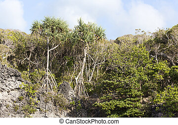The flora of New Caledonia close to the sea