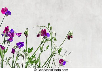 The floral background with Sweet pea.