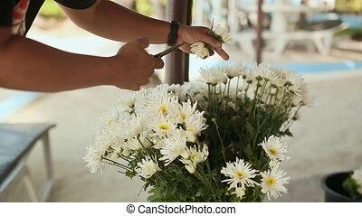 The florist prepares a bouquet of white flowers for a festive celebration.