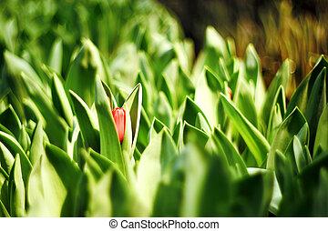 flower bud - The flower bud in the Garden