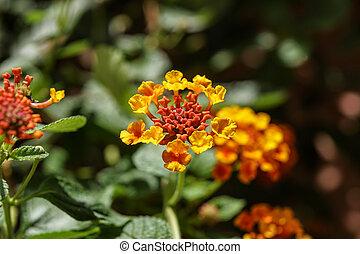 the flower. flower colorful. beautiful flower. orange flower.