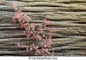 The flower grass on the old wooden background