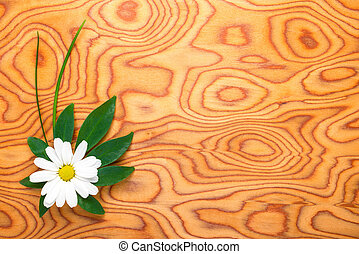 the flower of a chamomile and green leaf is on a background