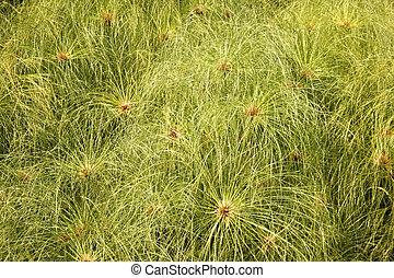 the flower of green grass
