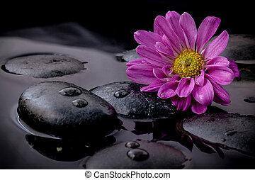 The flower on river stones spa treatment scene on black...