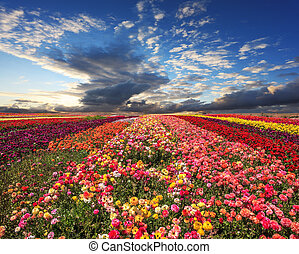 The flowers grown for export sales