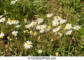 The flowers in a meadow