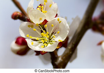 The flowers on apple