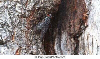 The fly crawls along the bark of a tree 2
