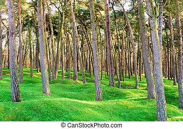 The forest wood and craters on battlefield of Vimy ridge