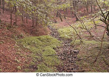 The forest floor rapids
