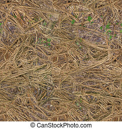 The forest soil is covered with dry grass .Texture or background
