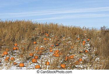 the forgotten pumpkins
