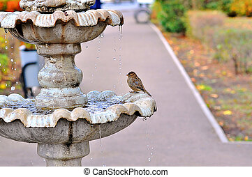 The fountain and the Sparrow