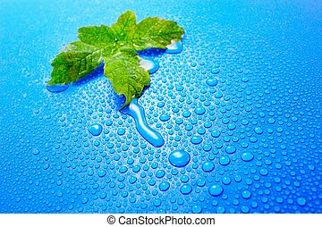 The fresh decision - Green leaf on a dark blue background...