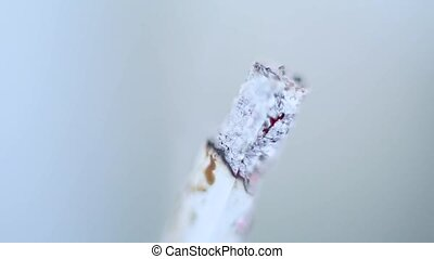 The fuming cigarette ashes macro
