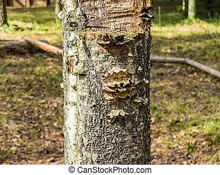 The fungus tree