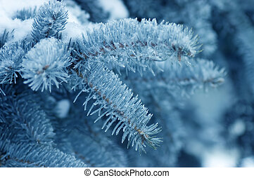 The fur-tree branch covered with hoarfrost