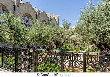 The Garden of Gethsemane in Jerusalem, Israel