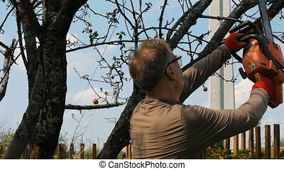 The gardener cuts the old branches on a tree, using a chain saw.