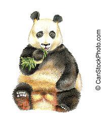 The giant Panda chewing bamboo.