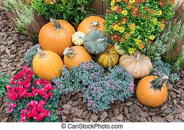 The giant pumpkins in the garden