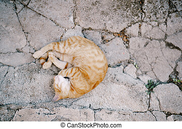 The ginger cat sleeps curled up in a ball on the gray asphalt.