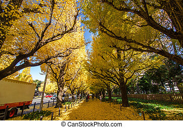 The Ginkgo Tree Avenue heading down to the Meiji Memorial Picture Gallery, Tokyo, Japan