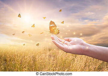 The girl frees the butterfly from the jar, golden blue ...