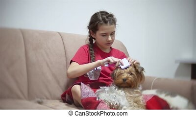the girl is combing the dog. baby girl doing a hairstyle for...