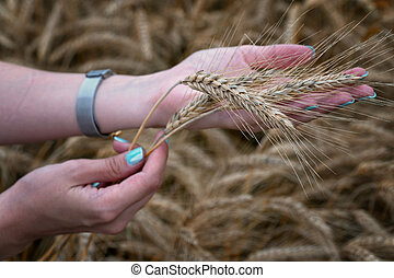 The girl is holding wheat ears in her hand