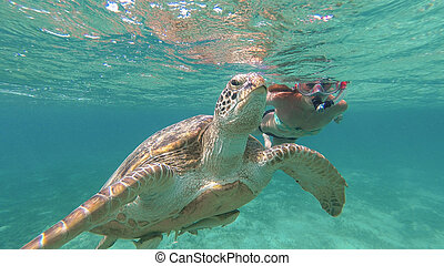 The girl is swimming next to the sea turtle. Red sea. Marsa ...