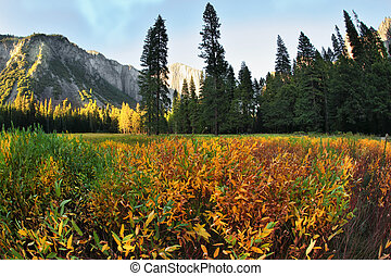 The glade in Yosemite park on a sunset