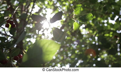 The glare of the sun in the leaves