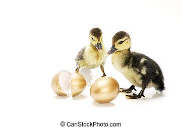 The Golden Eggs\\\' Story - Ducklings watching over golden...