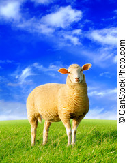 The golden sheep - Digital image processing from photo.