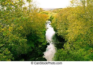 golden tree line of the river glen - the golden tree line of...