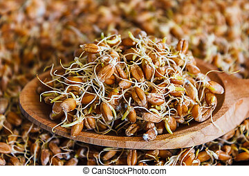 the grain sprouted wheat closeup, healthy food