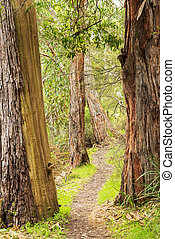 The Grampians Walking Trail