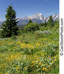 grand tetons - the grand tetons, as seen from signal ...
