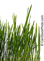 grass is isolated