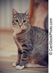 The gray striped cat with white paws and yellow eyes