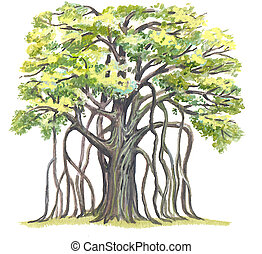The Great Banyan (Ficus benghalensis) - has the greatest area of a crown in the World.